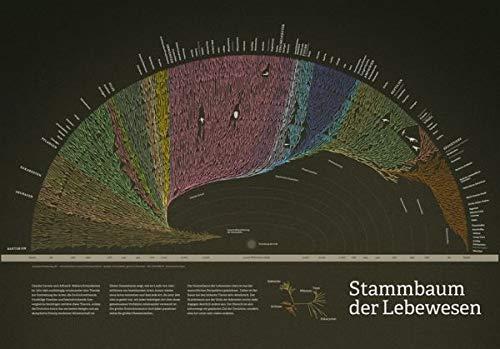 Stammbaum der Lebewesen 100 x 70 cm