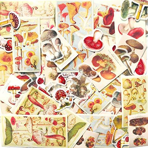 165PC Pilz Aufkleber, Vintage süße Pilz Aufkleber, Sammelalbum Dekoration Aufkleber Abziehbilder, Pflanzen Dekoration Aufkleber, für Laptop, Skateboard, Wasserflaschen, Computer, Telefon, DIY Handwerk